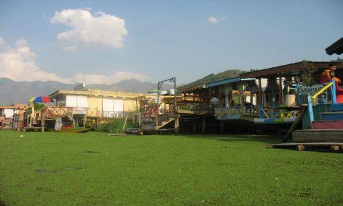 Zdjecie INDIE / Kaszmir / Srinagar / Jezioro Dal czasem przypomina łąkę, po której można pływać.