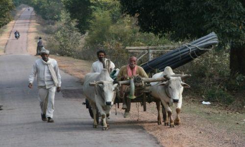 Zdjecie INDIE / Madhya Pradesh / Khajuraho / Droga do przyszłości