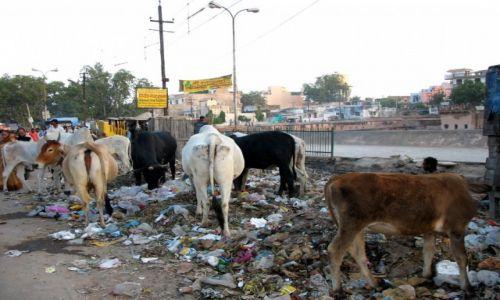Zdjecie INDIE / - / Varanasi / Oto Indie właśnie