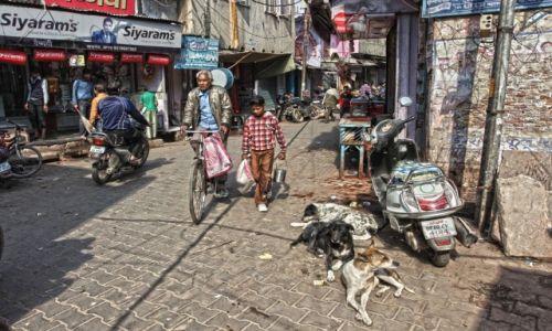 Zdj�cie INDIE / Agra / Ulica / Ulica w Agrze