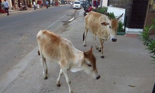 Zdjecie INDIE / Tamil Nadu / Mahabalipuram / mieszkańcy Mahabalipuram