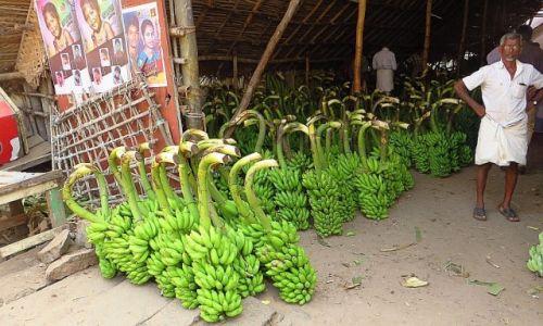 Zdjecie INDIE / Tamil Nadu / Tiruvannamalaj / sprzedawca bananów