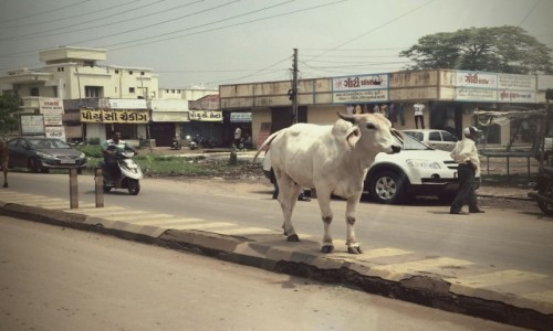Zdjęcie INDIE / Gujarat / Bombaj / Bharuch