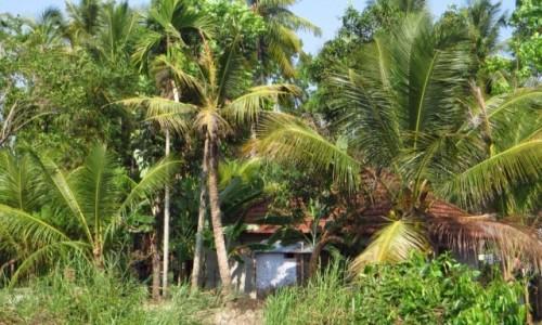 Zdjecie INDIE / Kerala / okolice Allepey / chatka wśród dr