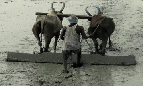 Zdjęcie INDIE / - / Gdzieś w Kerali / Harówka