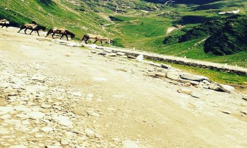 Zdjecie INDIE / Himanchal / Manali / Rohtang pass ho