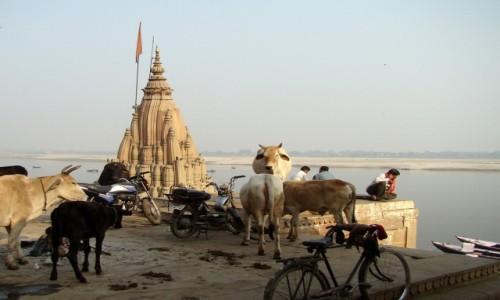 INDIE / Uttar Pradesh / Varanasi / Wszystko w jednym
