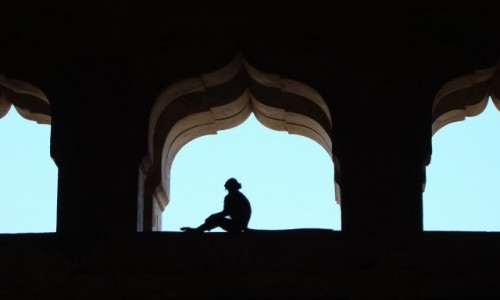 INDIE / Madhya Pradesh / Orchha / Cze�� Panie Darwin ;-)