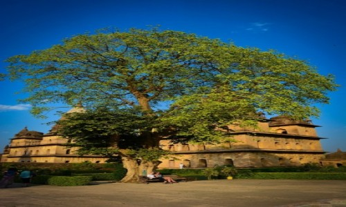 Zdj�cie INDIE / p�noc / orchha / Magic tree