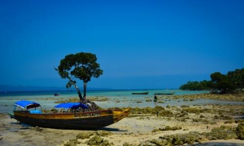 Zdjęcie INDIE / Andamany / Havelock Island / Raj za dnia..