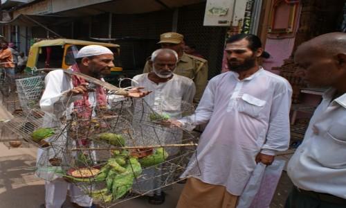 Zdjecie INDIE / Varanasi / Varanasi / sprzedawca papug