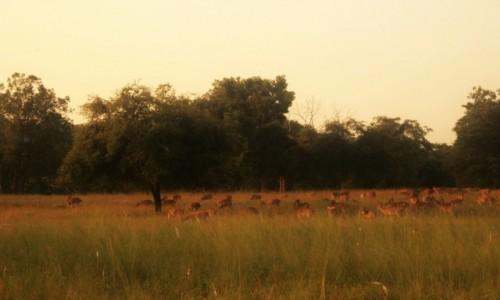 Zdjecie INDIE / Madhya Pradesh / Satpura / zwierzęta - saf