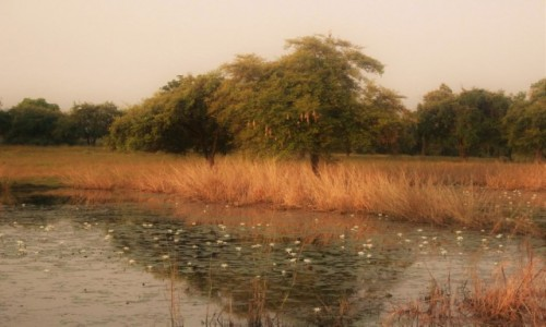 INDIE / Madhya Pradesh / Satpura / Roślinność