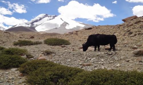 Zdjecie INDIE / Ladakh / Nimaling / Himalaje Nimali