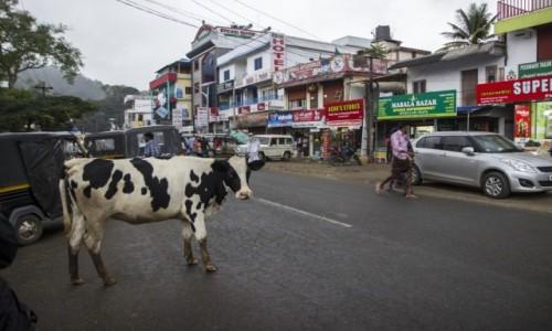 Zdjecie INDIE / Kerala / - / typowa indyjska