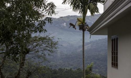 Zdjecie INDIE / Kerala / Munnar / małpki