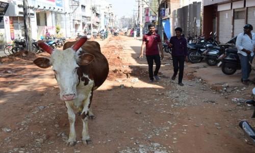 Zdjecie INDIE / Karnataka / Mysore / Mysore 2