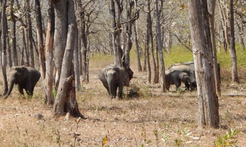 INDIE / Karnataka / Bandipur National Park / Dzikie słonie