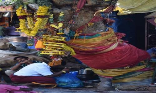 Zdjecie INDIE / Tamilnadu / Madurai / Drzewo
