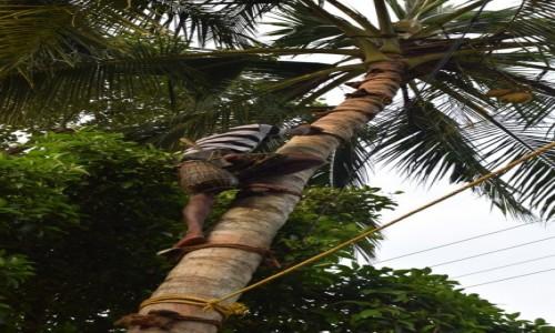 Zdjęcie INDIE / Kerala / Alappuzha / Palma