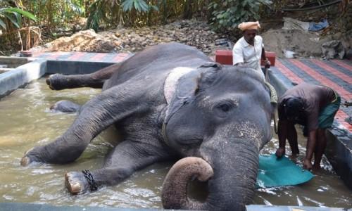 Zdjęcie INDIE / Kerala / Kumily / Kumily 4