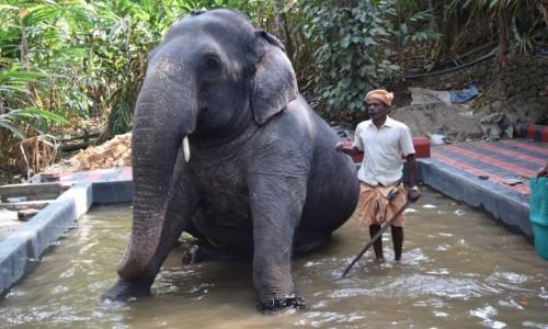 Zdjęcie INDIE / Kerala / Kumily / Kumily 5