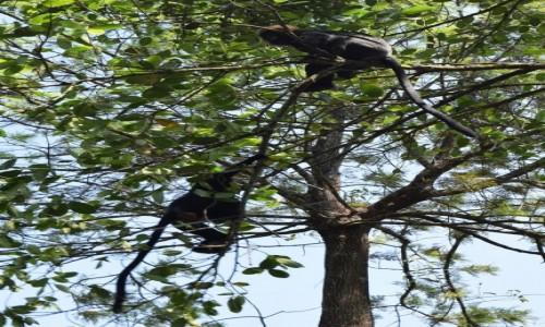 Zdjęcie INDIE / Kerala / Kumily / langury