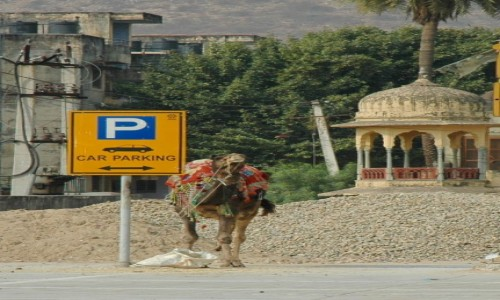 Zdjęcie INDIE / Radżastan / Fort Amber / Chcę być samochodem