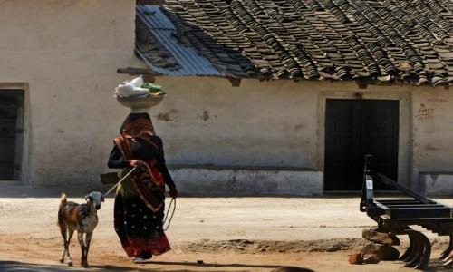 Zdjęcie INDIE / - / okolice RANTHAMBORE / Na spacerze