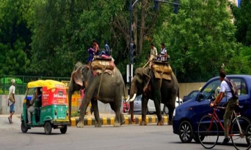 Zdjecie INDIE / Delhi / Delhi / Transport