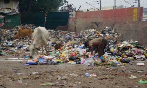 INDIE / Delhi / Delhi / walka  o byt