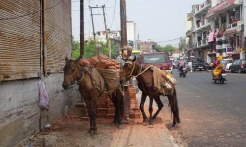 INDIE / Dżamu / Dżamu / Transport
