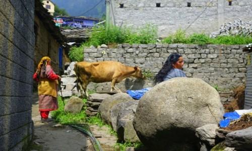 Zdjecie INDIE / Himalai Pradesz   / Manali / Manali