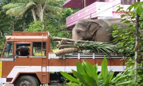 Zdjecie INDIE / Kerala / Alappuzha / transport słonia