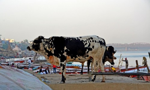 Zdjęcie INDIE / - / Varanasi / Varanasi