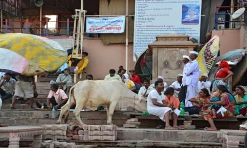 Zdjęcie INDIE / - / Varanasi / Gathy Varanasi