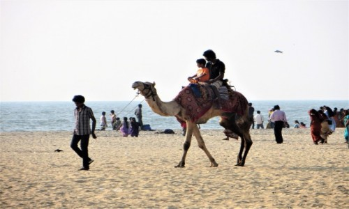 Zdjęcie INDIE / Kerala / Alappuzha /  z wielbłądem