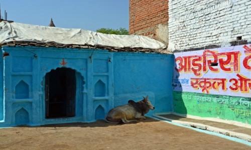 Zdjecie INDIE / - / Orchha / Indyjskie klimaty