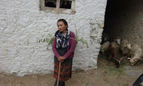 Zdjecie INDIE / Lamajuru / Lamajuru / Dziewczyna  z  kozami