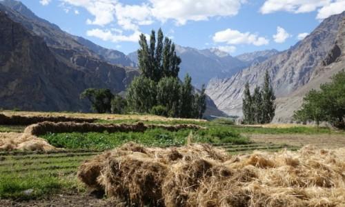 Zdjęcie INDIE / Dolina Nubry   / Dolina Nubry   / Polowe prace