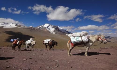 Zdjecie INDIE / Ladakh / Nimaling / Himalaje