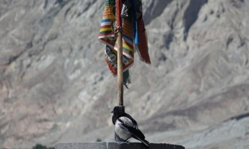 Zdjecie INDIE / Dolina Nubry / Dolina Nubry / Ptok