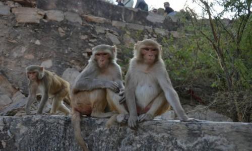 Zdjecie INDIE / - / Świątynia Małp Galta / Świątynia Małp Galta