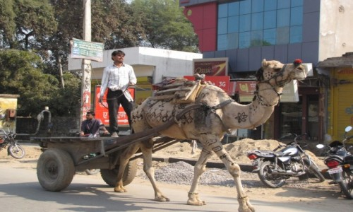 Zdjecie INDIE / - / Sawai Madhopur  / Ulica w Sawai Madhopur