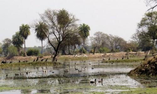 Zdjecie INDIE / Bharatpur / Park Narodowy Keoladeo / Różnorodność gatunkowa w parku