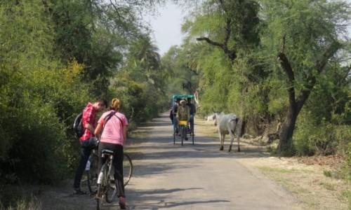 Zdjęcie INDIE / Bharatpur / Park Narodowy Keoladeo / Najłatwiej poruszać się rowerem