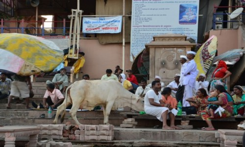 Zdjecie INDIE / - / Varanasi / Varanasi-Gaty