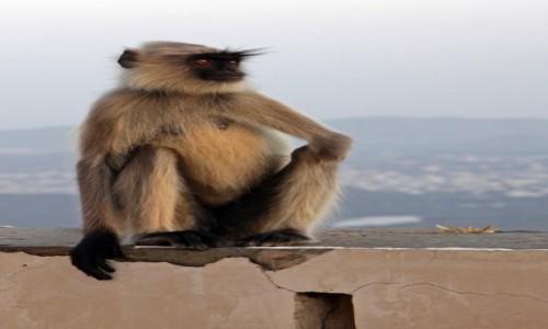 Zdjęcie INDIE / Uttar Pradesh / Udaipur / Zwierzęta Indii 1