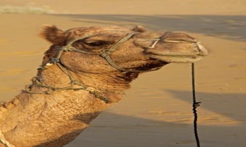 Zdjęcie INDIE / Radzasthan / Pustynia Thar / Zwierzęta Indii 3