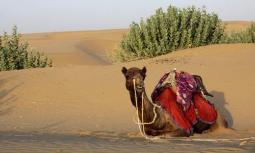 Zdjęcie INDIE / Radzasthan / Pustynia Thar / Zwierzęta Indii 4